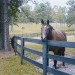 Wood Horse Corral